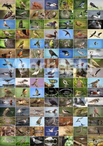 Vogelposter